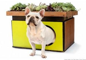 GreenRoof Dog House-1